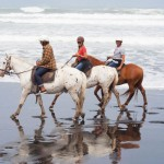 wild-coast-ruapuke-horse-riding-150x150