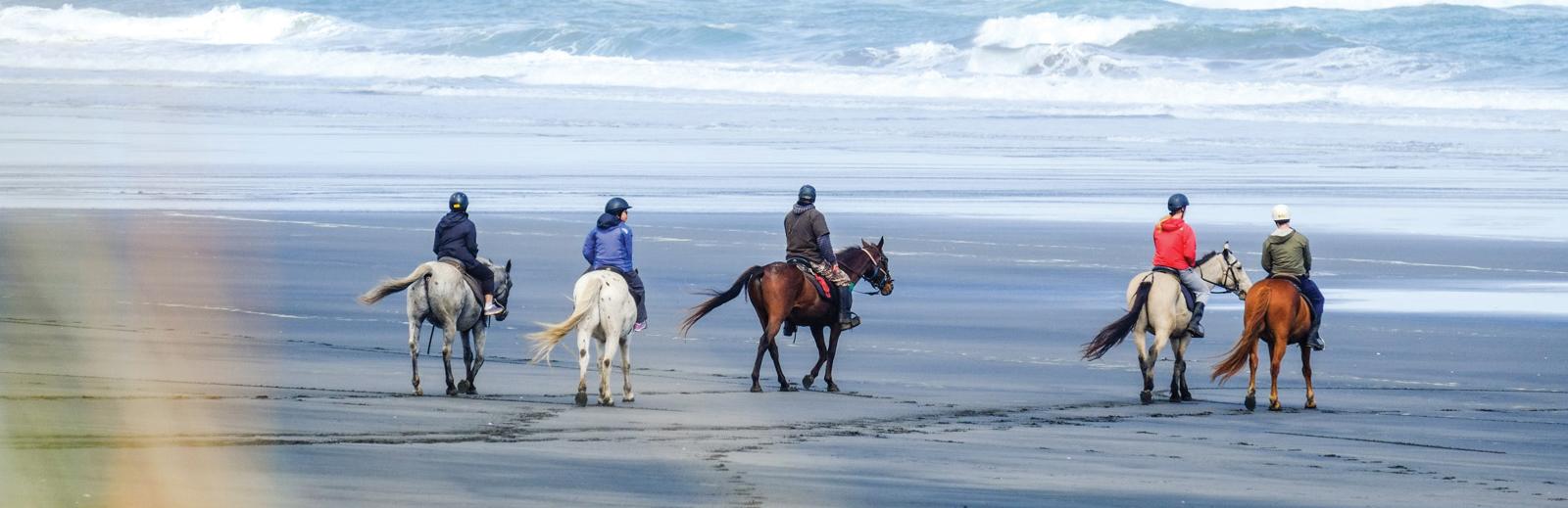 Wildcoast Ruapuke Horse Adventures  and Cabins
