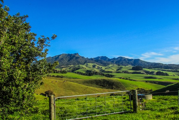 Raglan Farmstays - Dream View